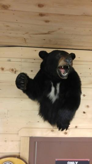 Bear-e1462305147207