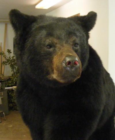 bears-e1458649267499